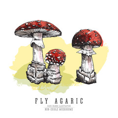 Fly agaric, non-edible poisonous forest mushrooms color sketch vector illustration isolated. Watercolor imitation.