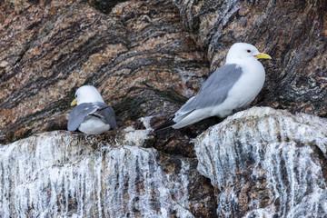 Closeup of Seagulls