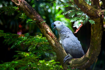Grey bird parrot on a tree in green forest