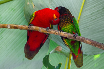Two funny parrot birds. Red and green.