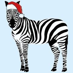 Zebra hat - vector, illustration, christmas, design, zoo