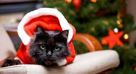 Picture of New Year's cat in Santa costume sitting at chair