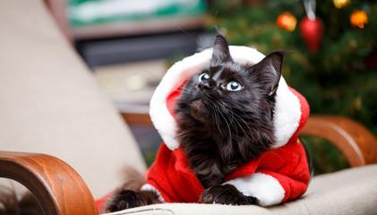 Portrait of New Year's cat in suit looking sideways