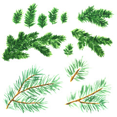 Hand painted watercolor clip art collection of spruce branches for Christmas decoration