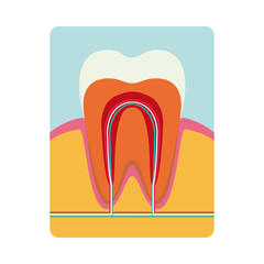 Realistic Tooth on white background