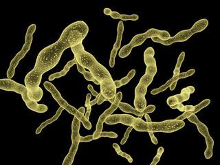 Viruses under microscope