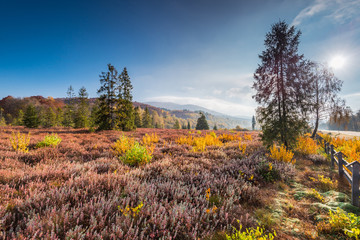 Colorful flora in autumn season in Bieszczady Carpathia Mountains