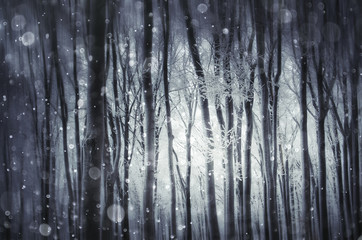 fantasy winter scenery, frozen trees in forest during snowfall