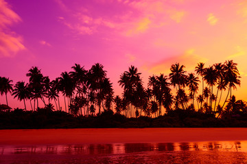 Foto op Plexiglas Roze Palm trees on the beach at vivid tropical beach sunset