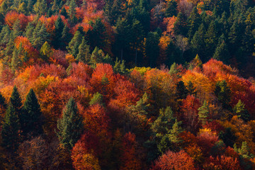 Autumn forest on mountain