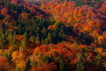 Colorful autumn forest on hills