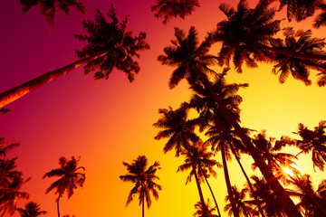 Tropical palms silhouettes at vivid sunset light
