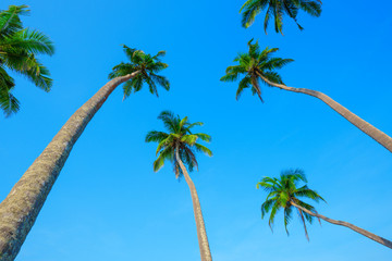 Tropical palm trees and clear blue sky