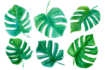 Watercolor tropical plants leaves