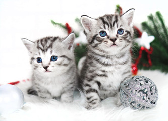 Two kittens new year christmas. Kittens for holidays