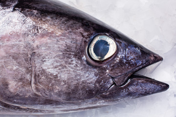 Close-up of albacore fish in market