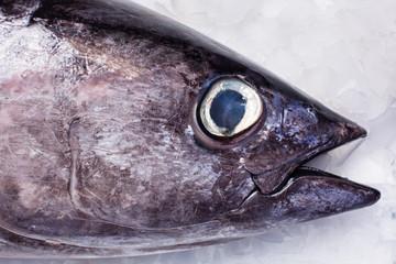 Albacore tuna head