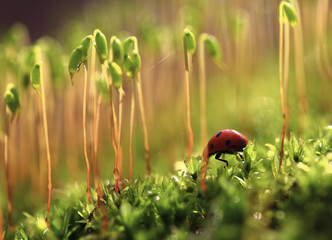 Farewell!The ladybug goes to thickets of the blossoming moss.