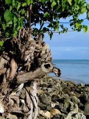 Playa de Tahiti en Polinesia Francesa (Oceania)