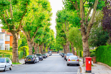 View of street lined with trees in London