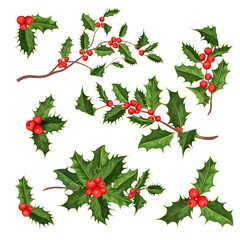 vector realistic holly, mistletoe leaves set
