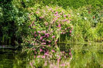 Colorful flowers in pink colors reflection