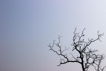 Baum mit Vögeln
