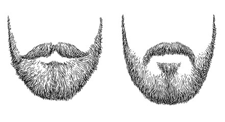 Beard illustration, drawing, engraving, ink, line art, vector