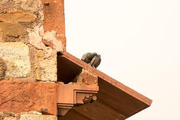 Dach mit Tauben