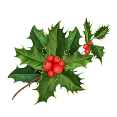 vector christmas holly mistletoe ilex leaves