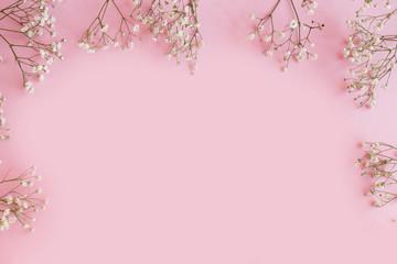 Gypsophila on a pink background