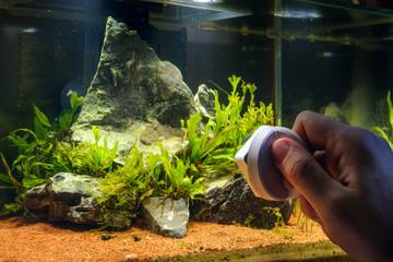 Home aquarium cleaning using magnetic fish tank cleaner. Man scrubbing glass of home decorative aquarium