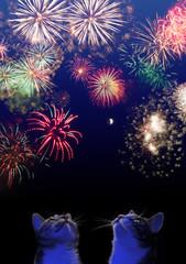 Haustiere und Silvester: Zwei Katzen beobachten Feuerwerk am Himmel