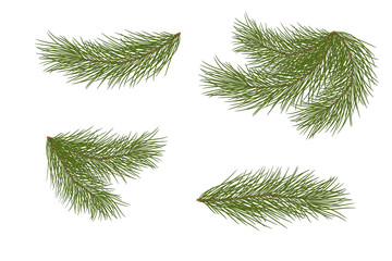 Vector illustration. Eps 10.Set of pine branches for festive decor. Isolated without a shadow.