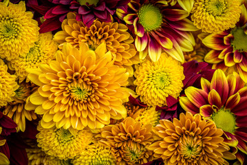 Mums in warm fall colors fill the frame.