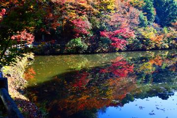 清川の紅葉