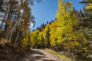 Dirt road through Autumn