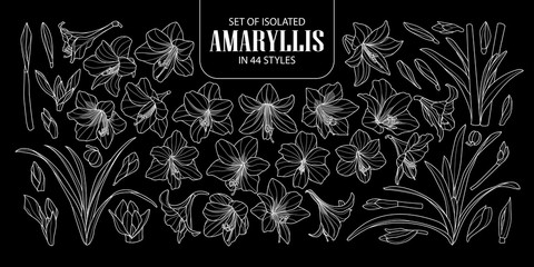 Set of isolated Amaryllis or Hippeastrum in 44 styles. Cute hand drawn flower vector illustration only white outline on black background.