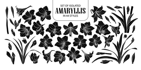 Set of isolated silhouette Amaryllis or Hippeastrum in 44 styles. Cute hand drawn flower vector illustration in white outline and black plane.