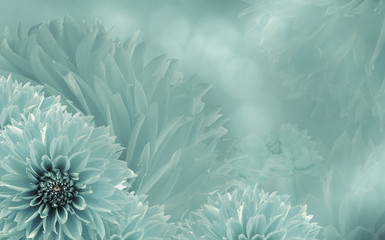 Floral  turquoise beautiful background of dahlias.  Flower composition  with an angel.  Nature.