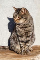 Gato callejero sentado al sol.