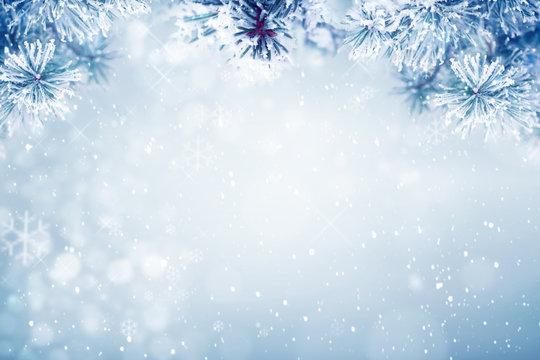 Winter background, falling snow on pine tree branches copy space, Christmas holiday background