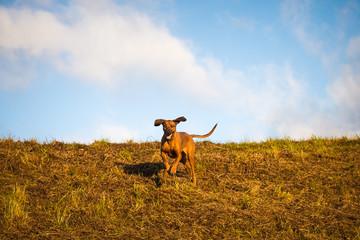 Schneller Hund vor blauem Himmel