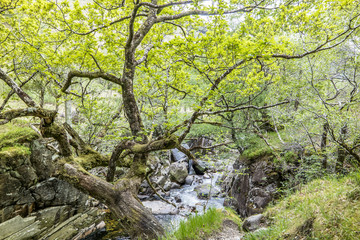 Forest and river close to Ben Nevis, Scotland