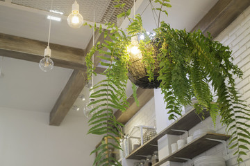 Fern in plant pot hanging on ceiling
