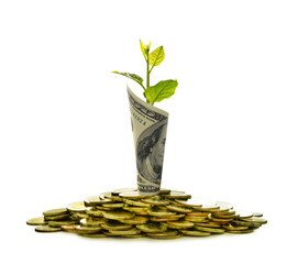 Image of pile of coins and rolled bank note with plant on top showing business, saving, growth, economic concept isolated on white background