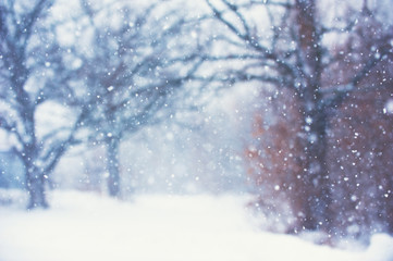 Blurred christmas background with trees, falling snow