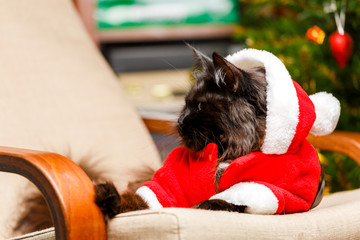 Festive portrait of black cat in Santa Claus costume