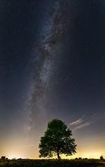 Drzewo i Droga Mleczna