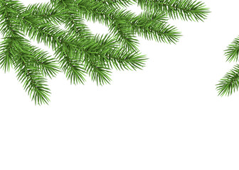 Xmas background with spruce branch.